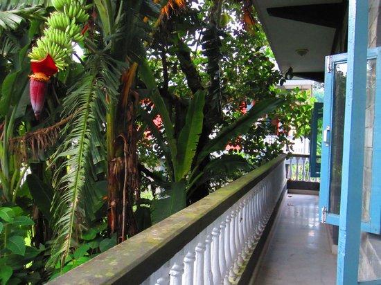 Sacred Valley Inn Pokhara: The balcony