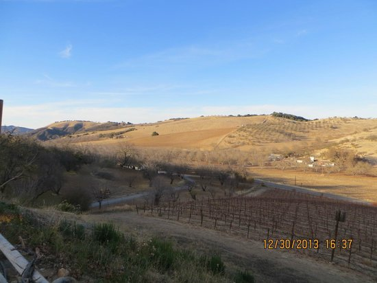 Wild Coyote Estate Winery Bed & Breakfast: Views