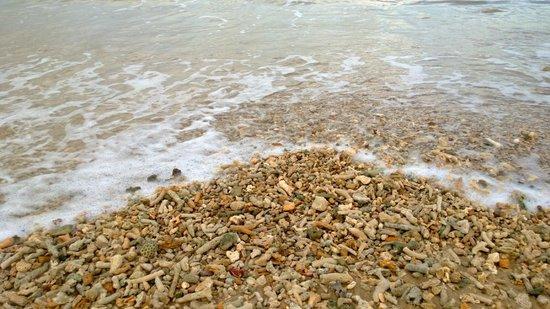 Amaya Beach: Beach