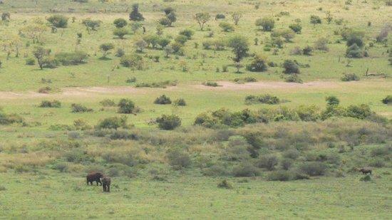 Kaia Tani Guesthouse: Alberto, questa è per te! due elefanti e IL rinoceronte nero.... piccolo, ma è lui! Grazie!