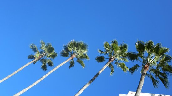 Embassy Suites by Hilton San Diego - La Jolla : looking up at the pool