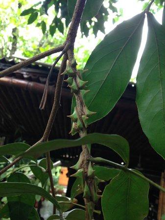 Cabanas Panambi : Contato com a natureza