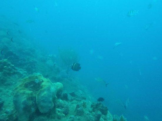 Diwa Dominicana: Fish
