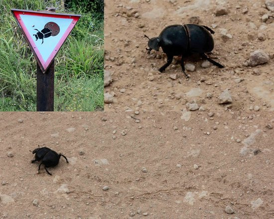 Addo Dung Beetle Guest Farm: The famous Dung Beetle with his own sign