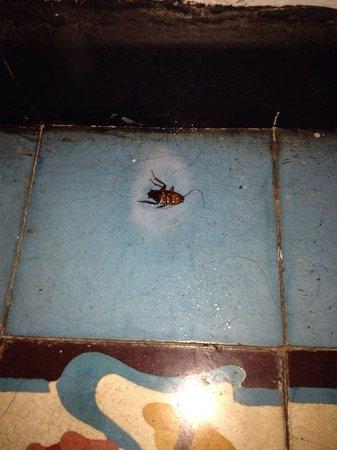 La Casa de la Tia: Hotel antihigiénico con cucarachas grandes y hormigas!