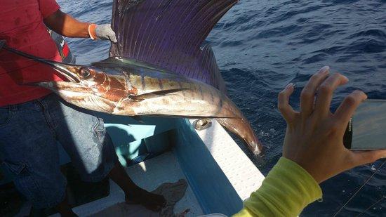 Julio's Tour & Fishing Guide Services: Pretty Sailfish