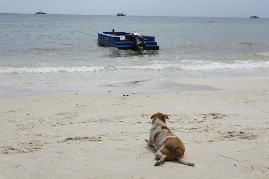 Vongdeuan Resort : пляж, Тим ждет новых постояльцев