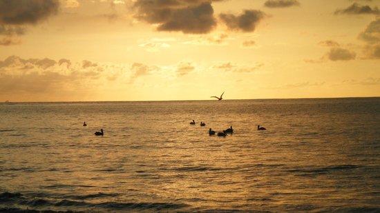 Samara Fishing Trip: pelican