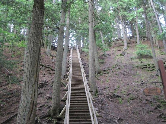 Victoria Park: Jacobs Ladder