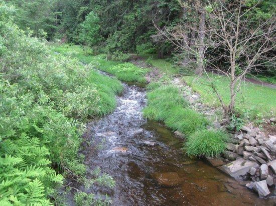Victoria Park: Little Stream