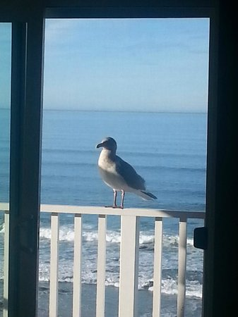 The Coho Oceanfront Lodge: Our balcony visitor