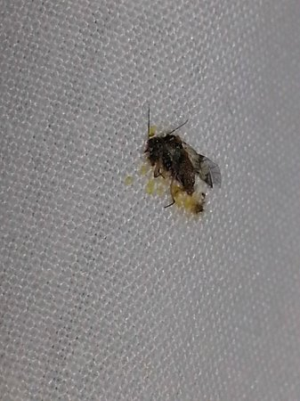 Hotel Riu Palace Bavaro : Dead Bug found in bed.  We stayed in the VIP section and this is what we got