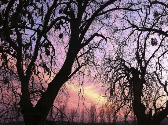 Park Winters: The neighboring trees at sunset
