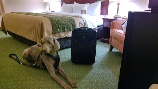 "Comfort Inn: ""Hey, GREAT room!"""