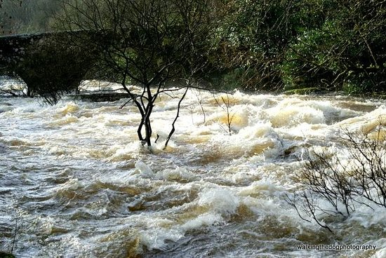 Dartmeet: Very full, very very fast!