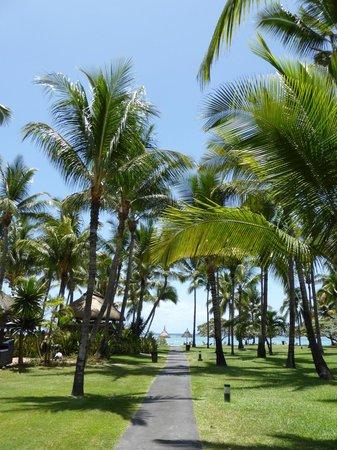 La Pirogue Resort & Spa-Mauritius: les cocotiers du parc