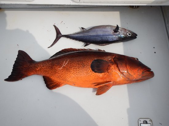 Kuredu Island Resort & Spa : sortie pêche au gros