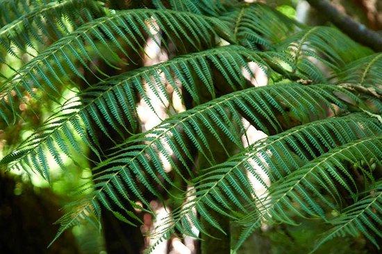 The Resurgence: Walking tracks in the bush