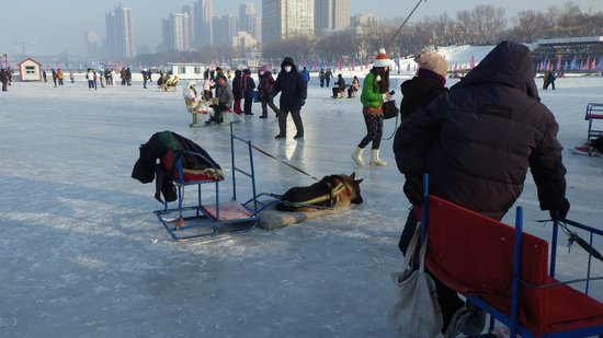 Stalin Park : Activities