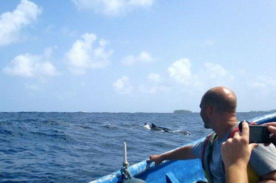Cacique Cruiser: Dolphins!