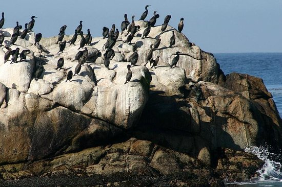 Monterey Peninsula Recreational Trail: along the trail