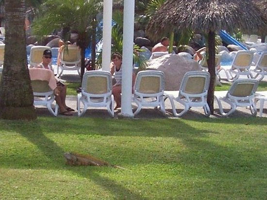 Hotel Riu Vallarta: Hugh Iguana at the Jalisco
