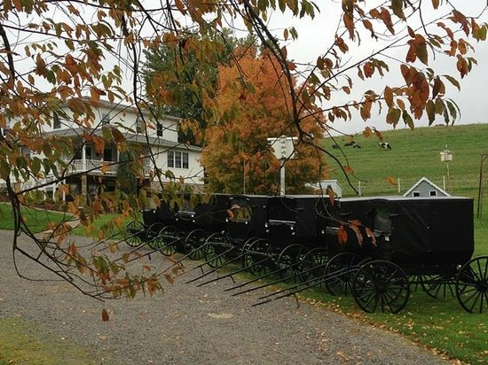 Amish Heartland Tours: Beautiful photo of  buggies lined up on a fall day in Holmes County, Oh  photo by La Vonne De Bo