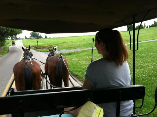 Ed's Buggy Rides: Amish history lesson and a buggy-ride all in one!