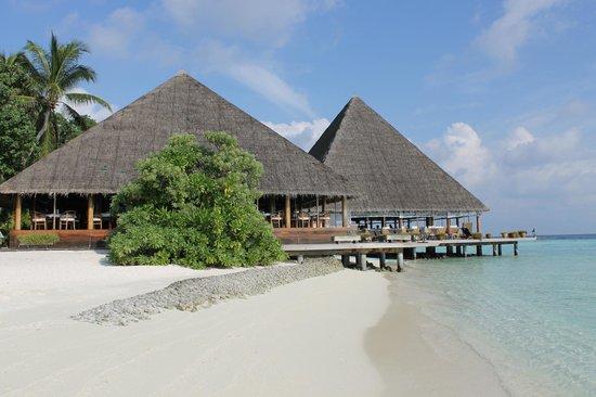 Gangehi Island Resort: Restaurante & Bar