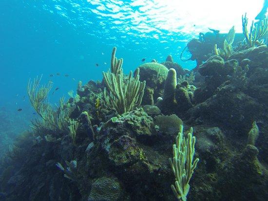 West Bay Divers: Diving in Roatan