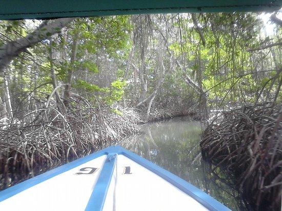 Laguna de la Restinga: Canal entre manglares