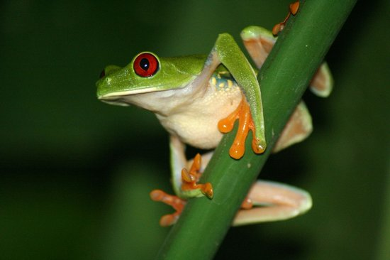 Tree House Lodge: Colin the frog in a bush near the Garden House