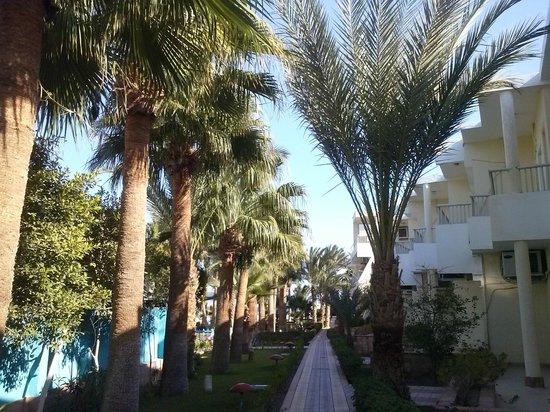 Triton Empire Hotel: Przed plażą