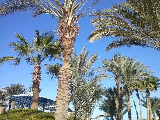 Triton Empire Hotel: Na plaży