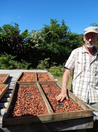 Villa Vanilla / Rainforest Spices: Henry showing us the cocoa beans drying.