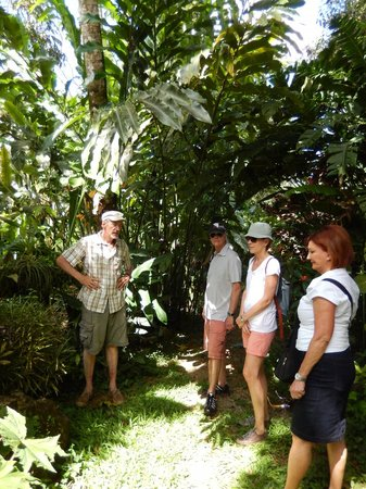 Villa Vanilla / Rainforest Spices: Henry guiding us through his nature trail and informing us of the different types of plants.