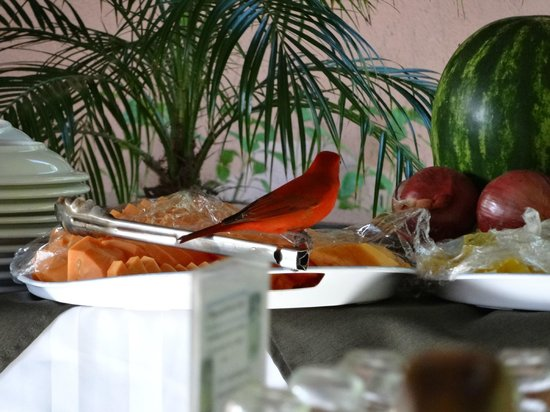 Finca Luna Nueva Lodge : Beautiful birds at breakfast!