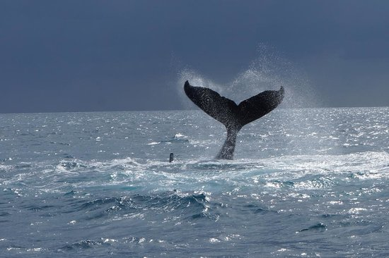Freedom Whale Watch: 1