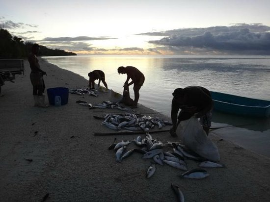 Aitutaki Escape: Locals netted a whole school of fish for friends and family- offered us one, but I just could no