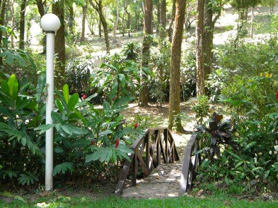 Park Eden Bed & Beakfast: Parte del jardín y alrededores