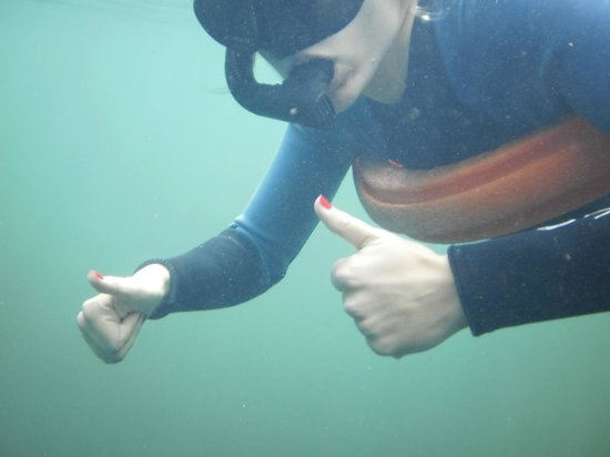 Snorkel With The Manatees : This adventure is a thumbs up!