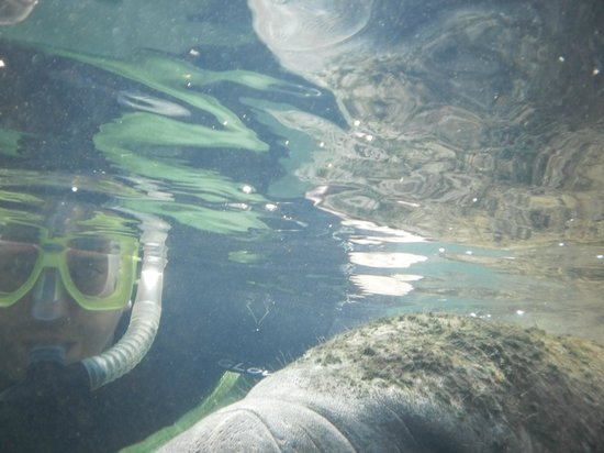 Snorkel With The Manatees : Loving it!