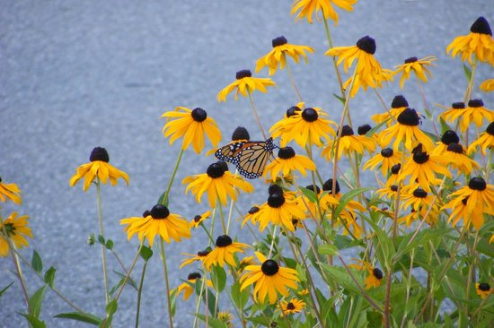 Comfort Inn & Suites: Flowers and Butterflies in car park