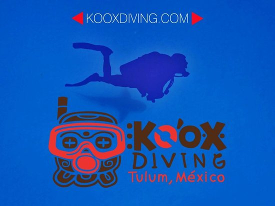Koox Diving: kooxdiving takes your diving with the Bullshark… AMAZING