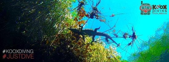 Koox Diving : Cenote Carwash enjoy the views and have fun..kooxdiving tulum