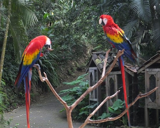 Yat B'alam Boutique Hotel: MacCaws living at the bird refuge