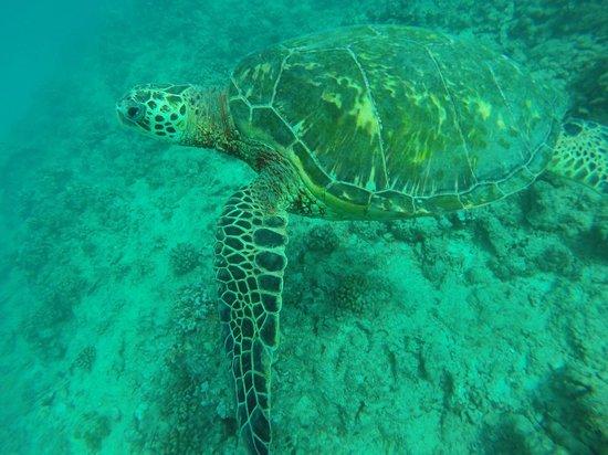 Kaimana Divers: turtle canyon