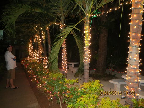 Christmas Lights In Palm Trees.Christmas Lights On Palm Trees Picture Of Coco Lapalm Sea