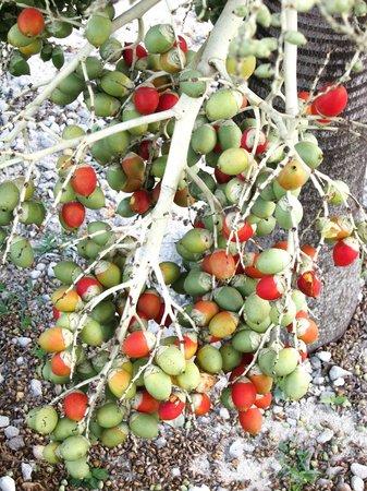 Muri Shores : Interesting fruit