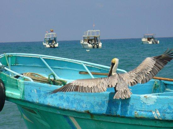 Finca Punta Ayampe: puerto de embarcaciones artesanales